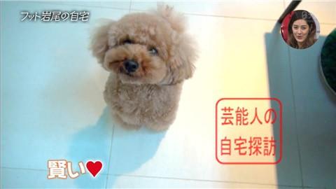 【愛犬との独身生活】フットボールアワー岩尾が素敵すぎる自宅を公開【画像あり】010