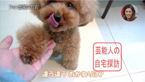 【愛犬との独身生活】フットボールアワー岩尾が素敵すぎる自宅を公開【画像あり】011